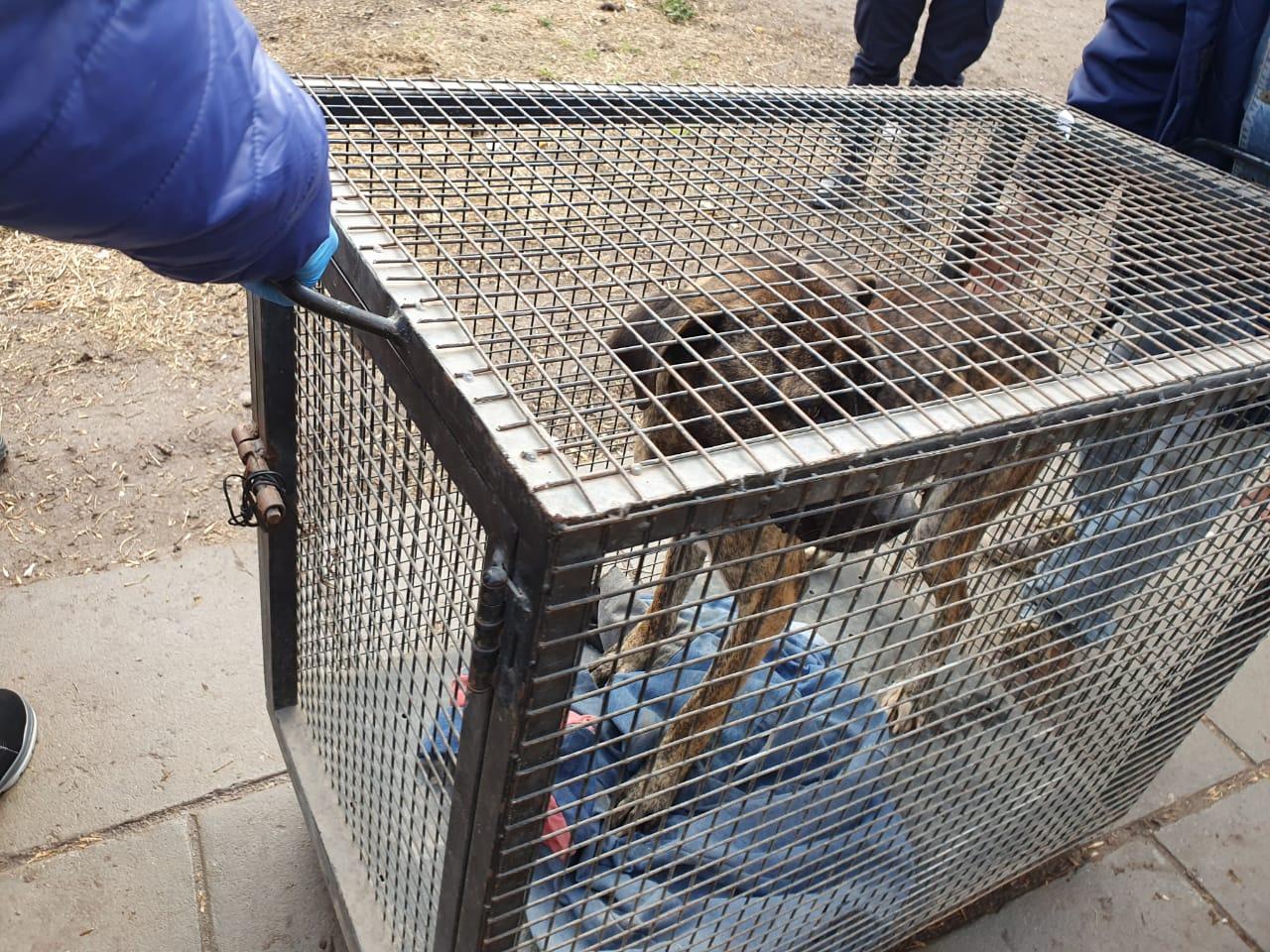Rescate y puesta en resguardo en el marco de proceso de maltrato animal