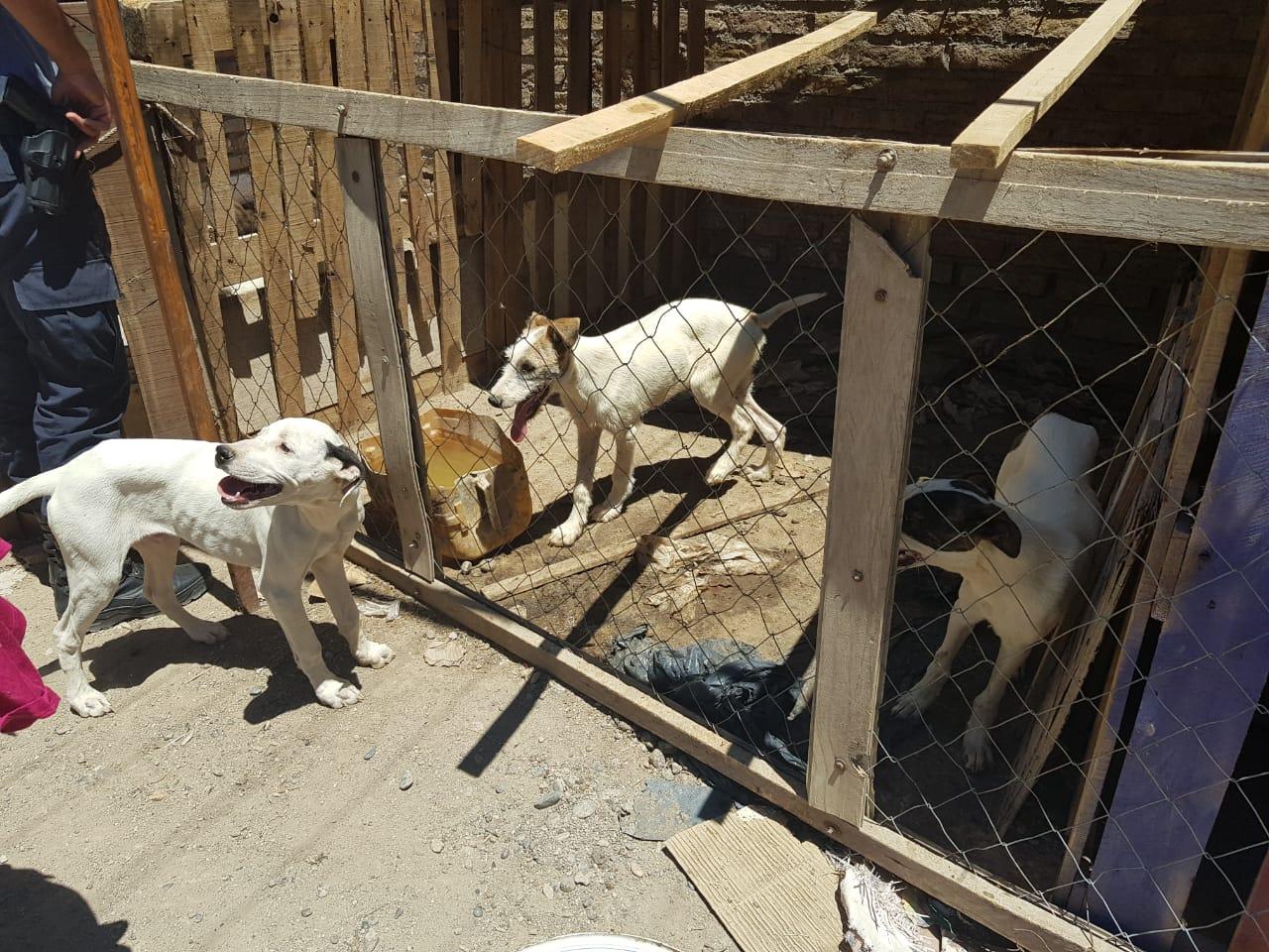 Allanamiento y rescate de cachorros por denuncia por maltrato animal